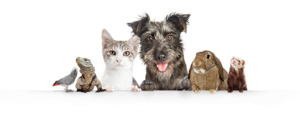 Questionnaire téléconsultation vétérinaire